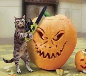cat with chainsaw carving a pumpkin