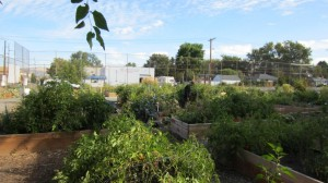 Sugar House Community Gardens at Tennis Courts