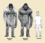 Bigfoot found in Utah's northern forests