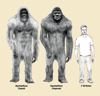 Image result for bigfoot tropical