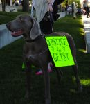 Justice for Geist: The Backyard Dog Killed By SLC Officer