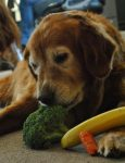 Pet Nutrition: What Are You Feeding Your Dog?