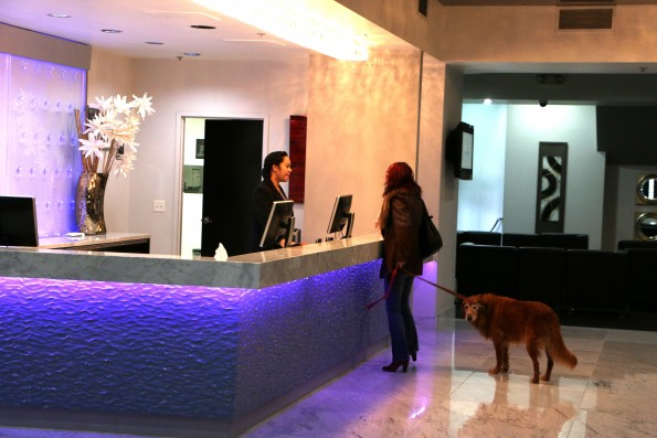 pet friendly check in