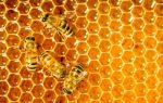 "<h1 itemprop=""name"">The Truth About Honey</h1>"