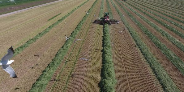 flying batemans dairy with our new utah stories drone--This tractor has a winrow attachment-- visit utahstories youtube channel to see video of our new drone flying with the seagulls at