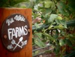 """<h1 itemprop=""""place"""">Bill White Farms</h1>"""