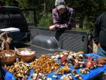 "<h1 itemprop=""natural living"">Foraging Fall Foods</h1>"