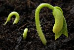Get Ready for Spring by Starting Seeds Indoors