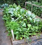 Get Your Garden Started With Easy Spring Vegetables and Cover Crops