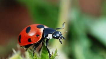 Using Beneficial Bugs to Enhance and Protect Your Garden