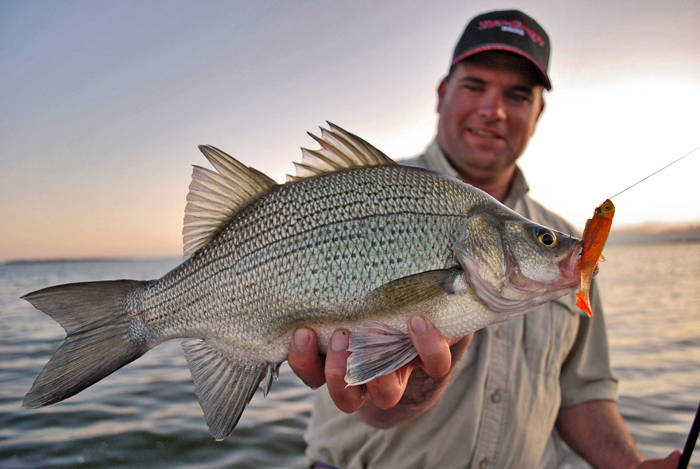 Spring white bass fishing in utah lake utah stories for Small fishing sponsors