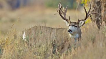 Collecting Shed Antlers is a Hobby for Some, Big Business to Others