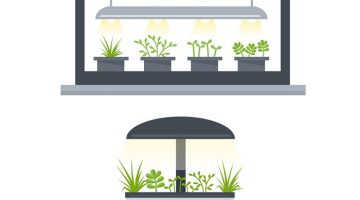 How To Grow Herbs in Hydroponics