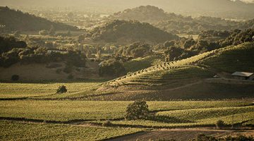 Wine o' the Week: Stags' Leap 2014 Cabernet Sauvignon