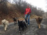 A New Leash on Life: A Nurse Practitioner Finds Happiness As A Dog Walker