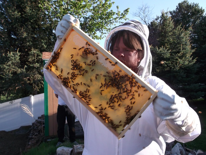 Desert Hive Supply: Ogden Firm Puts Beehives in the Beehive State