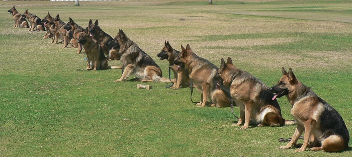 Dog Obedience for Everyone