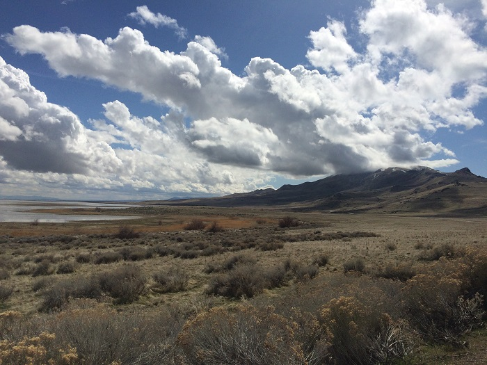 Vast and Isolated Antelope Island: Camping with Citronella Under the Stars