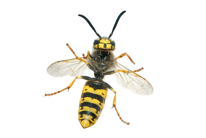 Wasps Can Be Wonderful