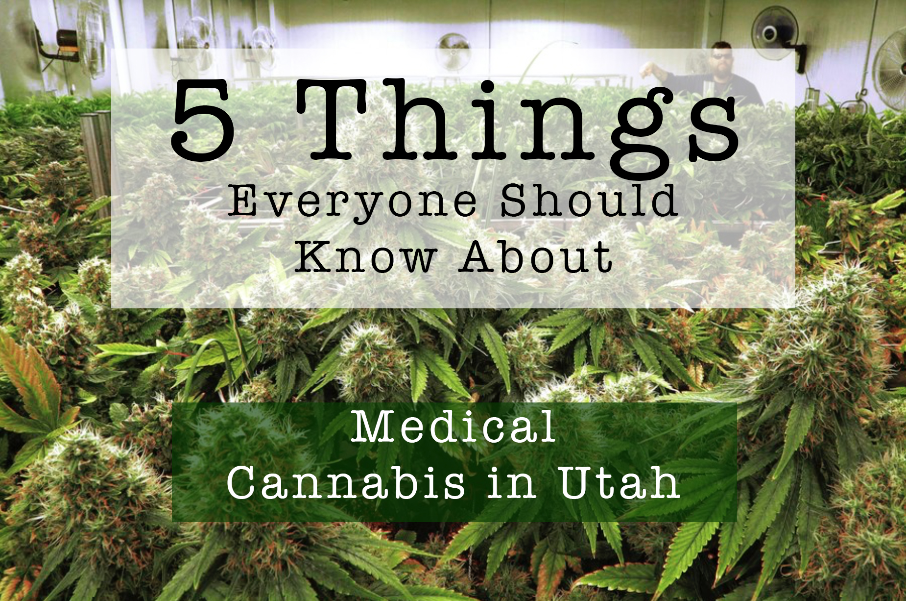 5 Things You Should Know About Medical Cannabis in Utah