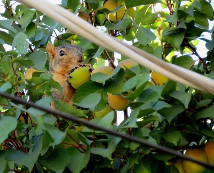 Local Native Wildlife: Pigeons, Squirrels, and Blackbirds, Oh My!