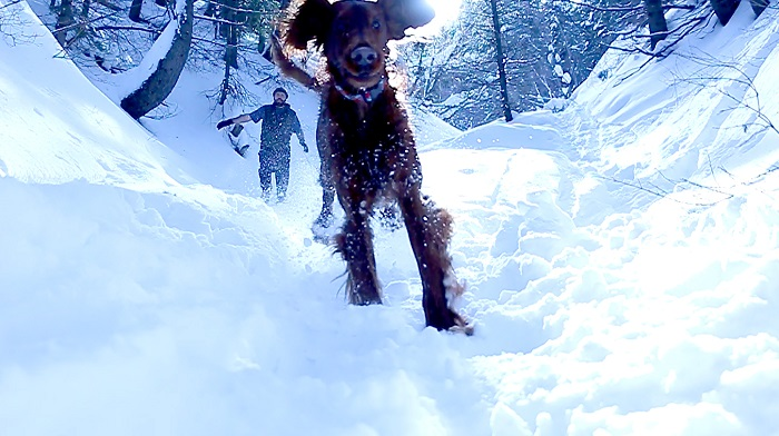 Running In The Utah Mountains With Dogs In Deep Snow
