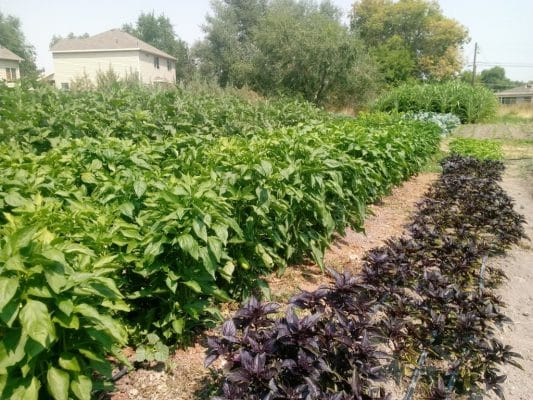 Wasatch Community Gardens has cultivated good health for your body and for your community for the last three decades, because they know agriculture is, or should be, connected more to culture than to business.