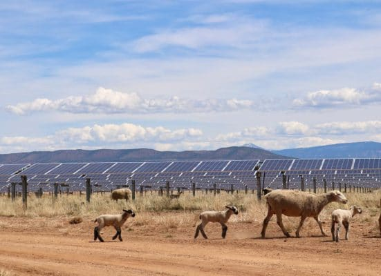 Solar farms present opportunity for sheep ranchers in Utah by having sheep roam the solar farm munching the weeds that grow between solar panels.