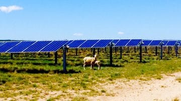 Solar farms present opportunity for sheep ranchers in Utah