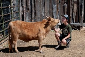 The Run Down Ranch understand the value of teaching kids about animals by allowing experiential activities.