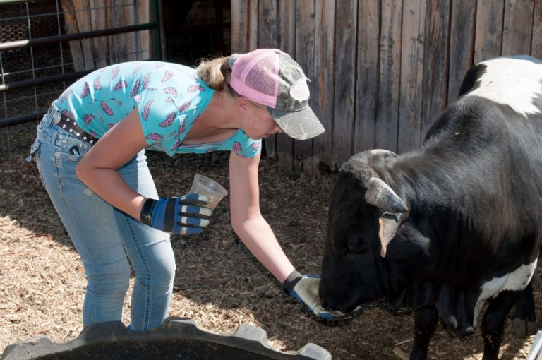 The Run Down Ranch understand the value of teaching kids about animals by allowing experiential activities .