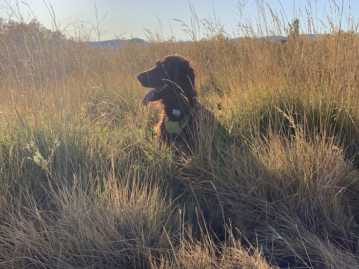 running and hiking with dogs in Utah