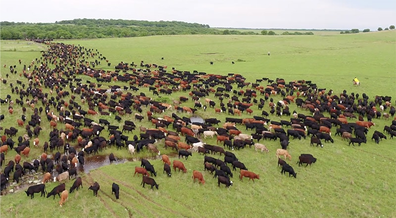LDS-Church owned Ag Reserves Deseret Ranch in Florida.